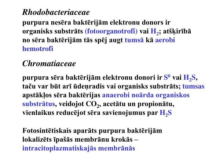 Rhodobacteriaceae