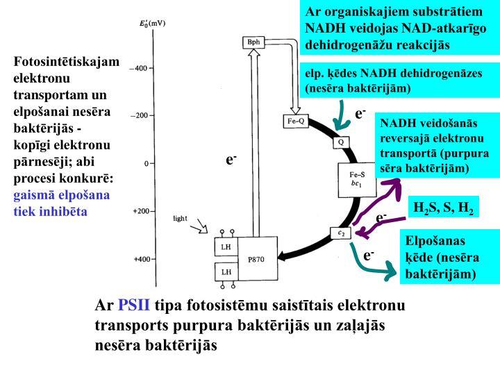 Ar organiskajiem substrātiem NADH veidojas NAD-atkarīgo dehidrogenāžu reakcijās