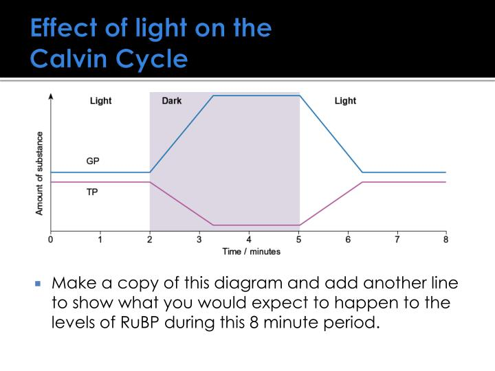 Effect of light on the