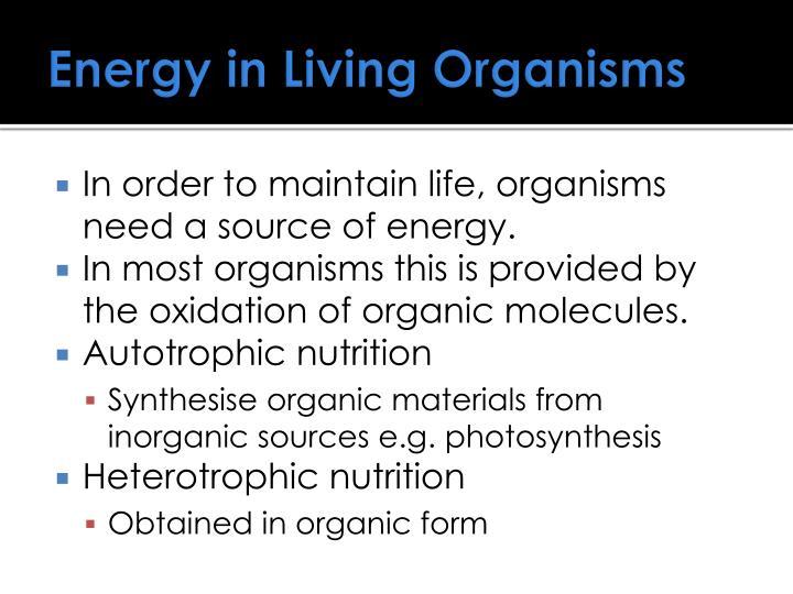 Energy in Living Organisms