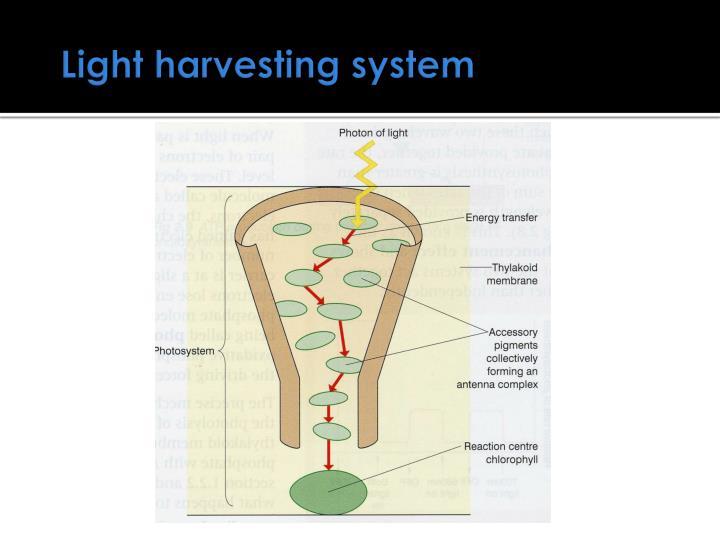 Light harvesting system