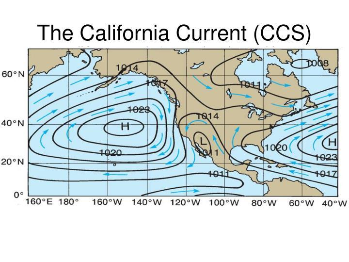 The California Current (CCS)