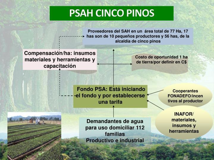 Proveedores del SAH en un  área total de 77 Ha, 17 has son de 10 pequeños productores y 56 has, de la alcaldía de cinco pinos