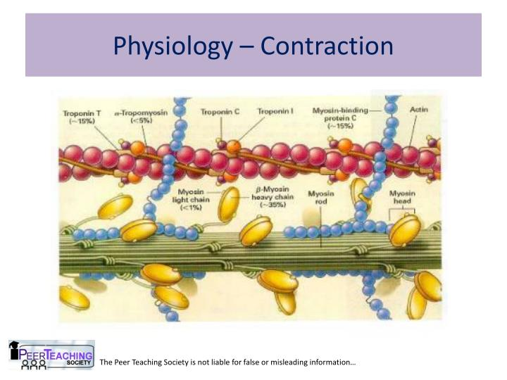 Physiology – Contraction