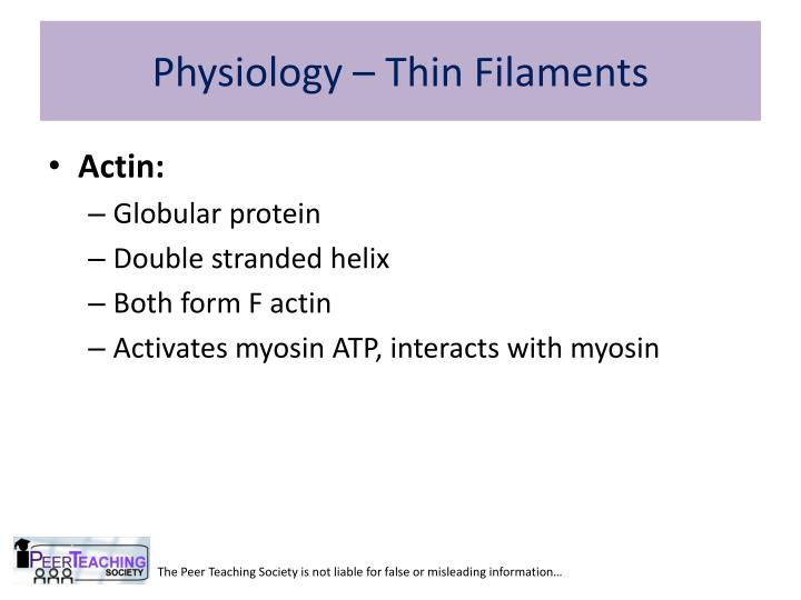Physiology – Thin Filaments