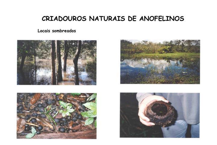 CRIADOUROS NATURAIS DE ANOFELINOS