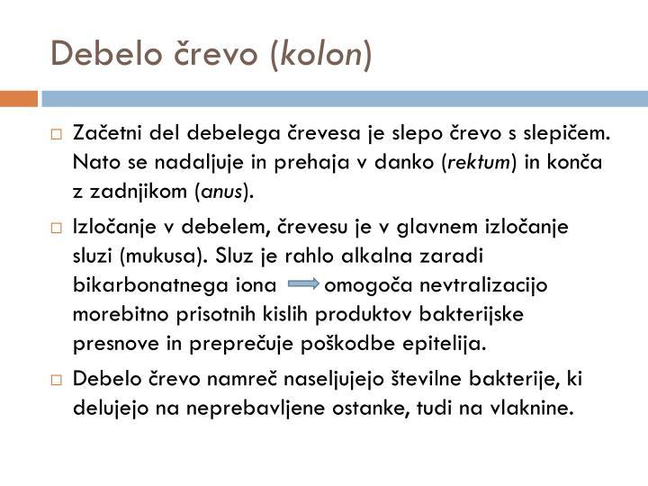 Debelo črevo (