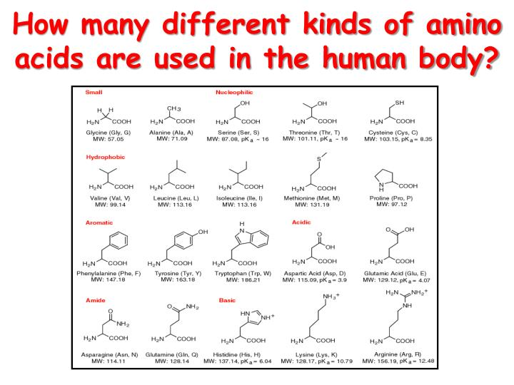 How many different kinds of amino acids are used in the human body?