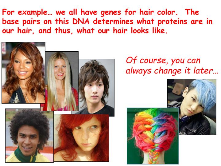 For example… we all have genes for hair color.  The base pairs on this DNA determines what proteins are in our hair, and thus, what our hair looks like.