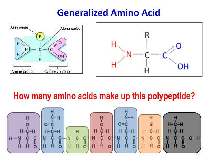 Generalized Amino Acid