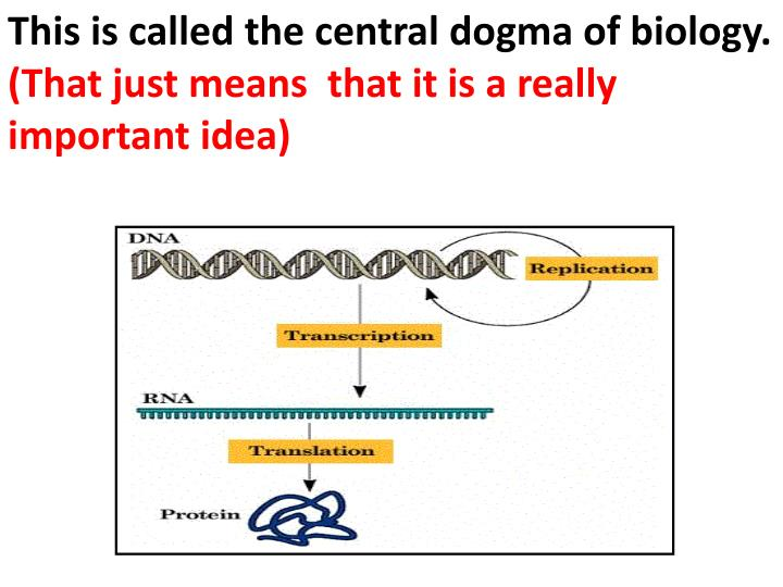 This is called the central dogma of biology.