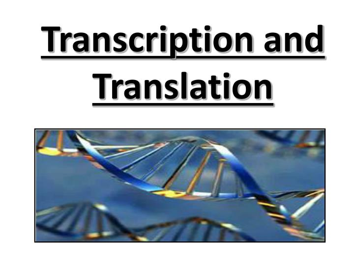 Transcription and Translation