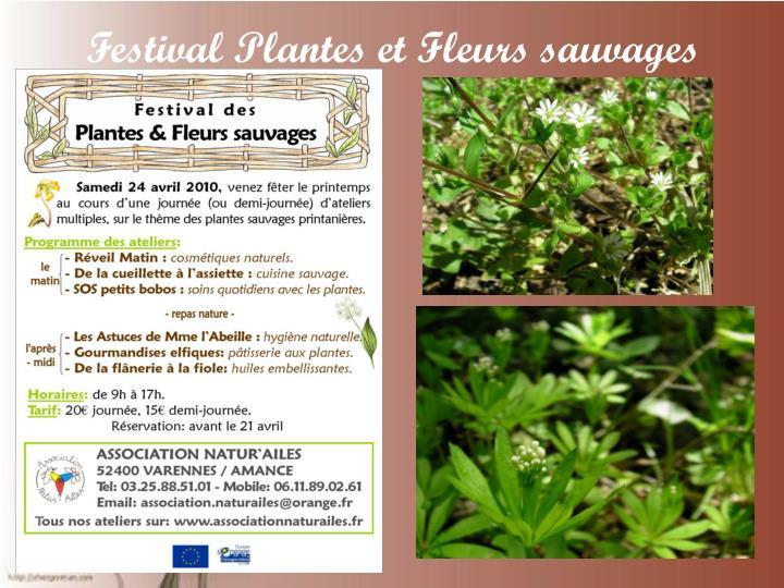 Festival Plantes et Fleurs sauvages