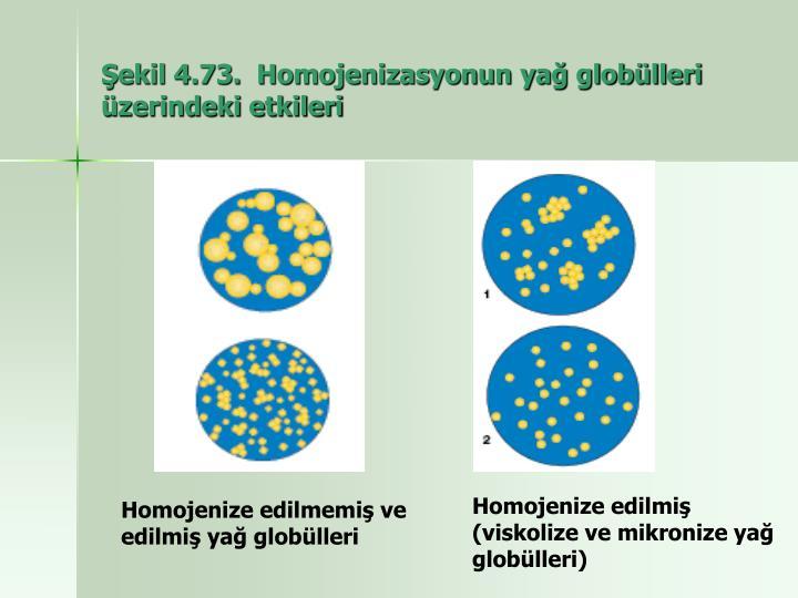 Şekil 4.73.  Homojenizasyonun yağ globülleri üzerindeki etkileri