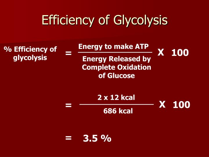 Efficiency of Glycolysis
