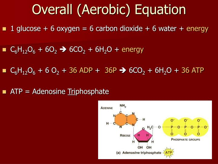 Overall (Aerobic) Equation