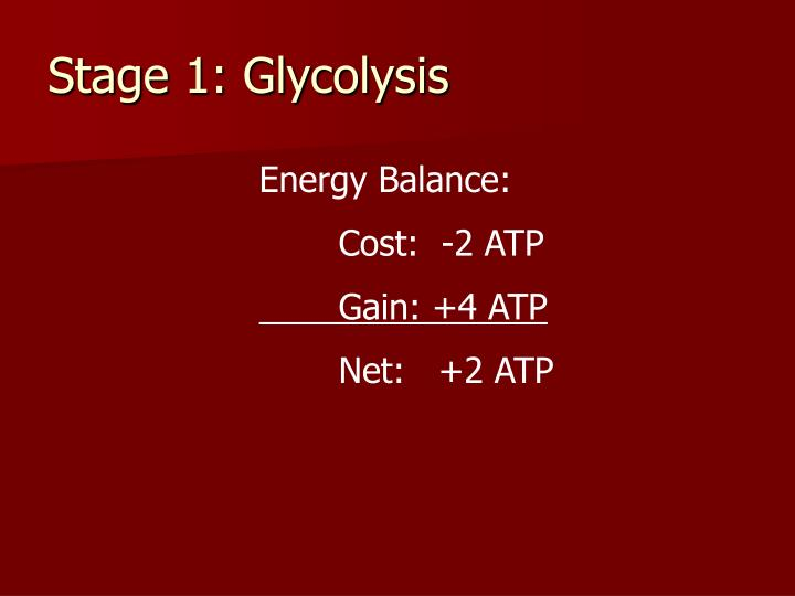 Stage 1: Glycolysis