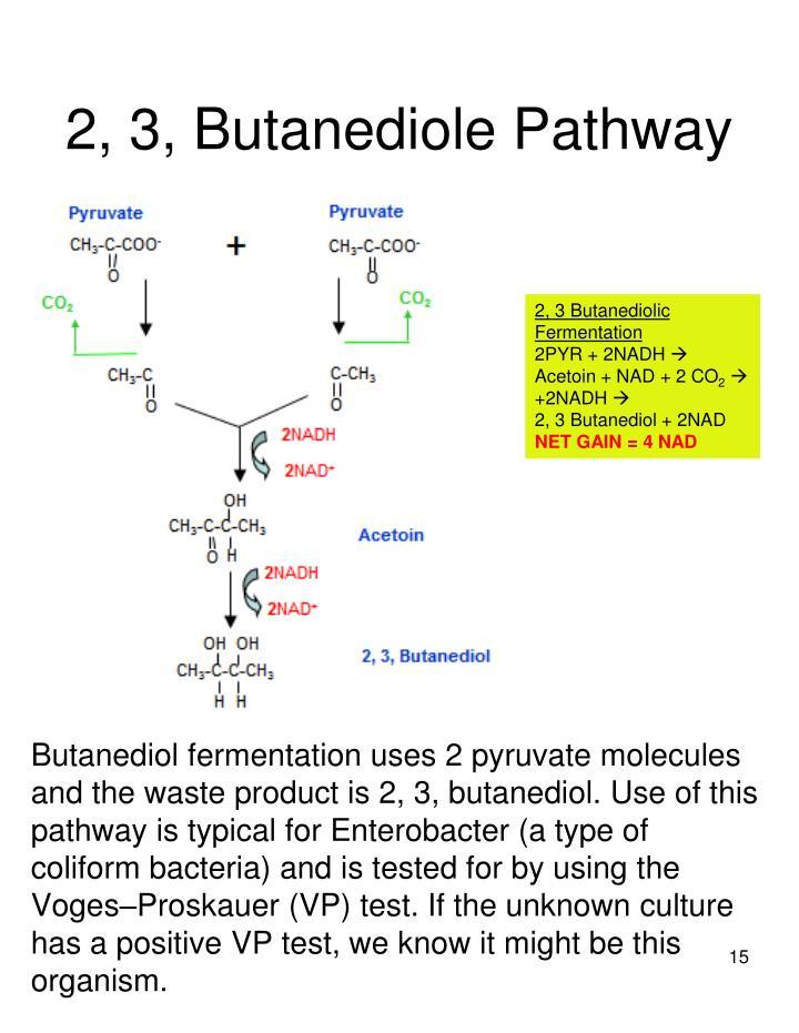2, 3, Butanediole Pathway