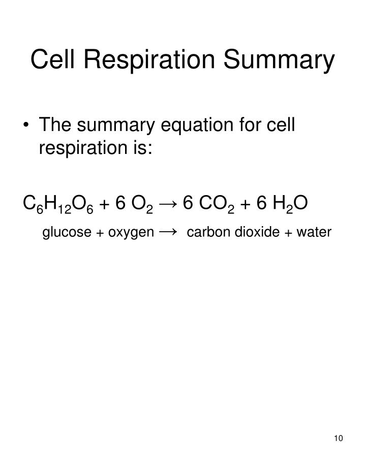 Cell Respiration Summary
