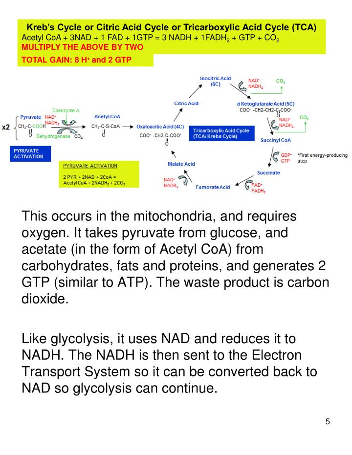 Kreb's Cycle or Citric Acid Cycle or Tricarboxylic Acid Cycle (TCA)