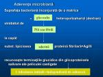 aderen a microbian