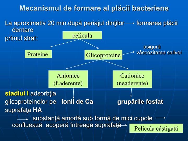 Mecanismul de formare al plăcii bacteriene
