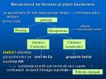 mecanismul de formare al pl cii bacteriene