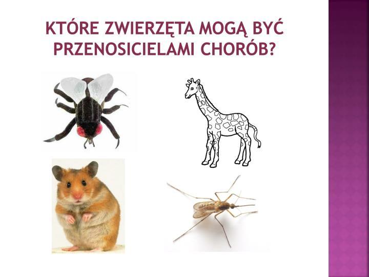 Które zwierzęta mogą być przenosicielami chorób?