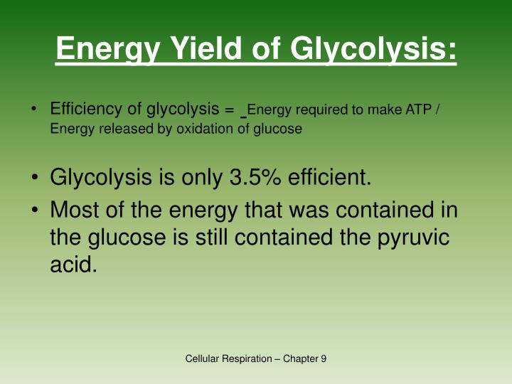 Energy Yield of Glycolysis: