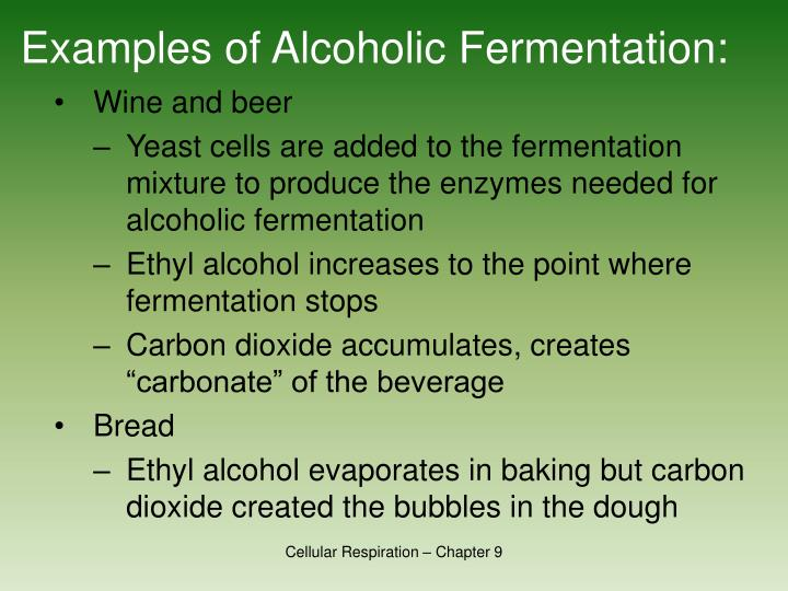 Examples of Alcoholic Fermentation: