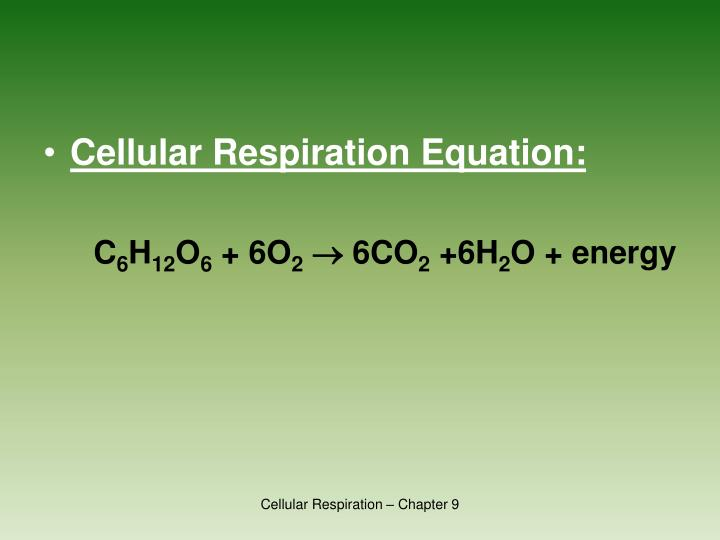 Cellular Respiration Equation:
