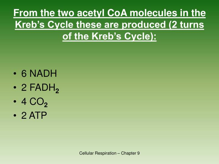 From the two acetyl CoA molecules in the Kreb's Cycle these are produced (2 turns of the Kreb's Cycle):
