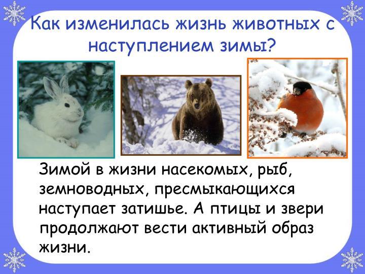 Как изменилась жизнь животных с наступлением зимы?