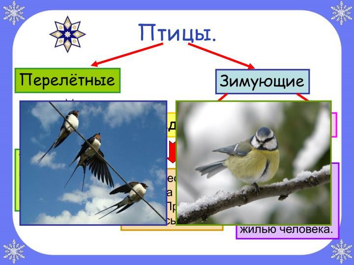 Птицы.