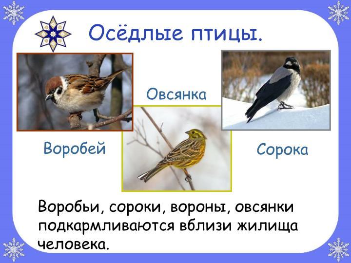 Осёдлые птицы.