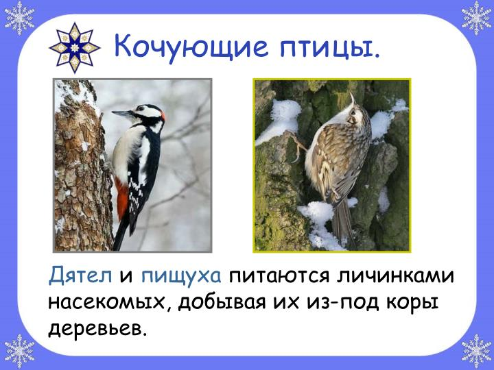 Кочующие птицы.