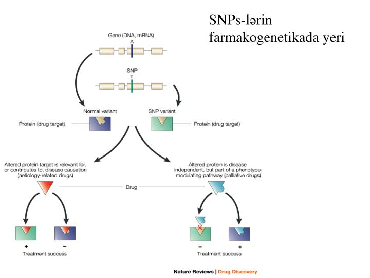 SNPs-lərin farmakogenetikada yeri