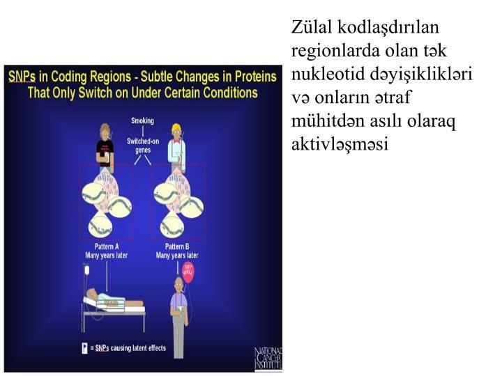 Zülal kodlaşdırılan regionlarda olan tək nukleotid dəyişiklikləri  və onların ətraf mühitdən asılı olaraq aktivləşməsi