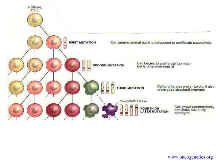 www.oncogenetics.org