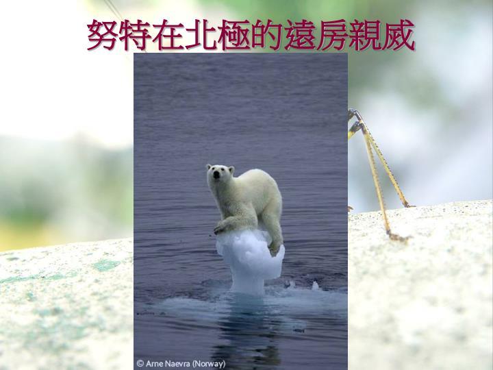 努特在北極的遠房親烕