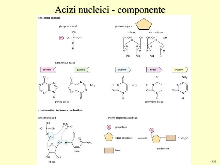 Acizi nucleici - componente