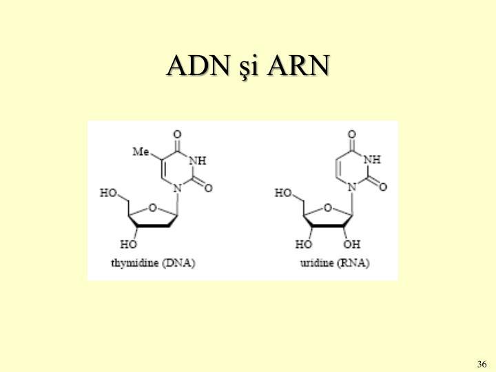 ADN şi ARN