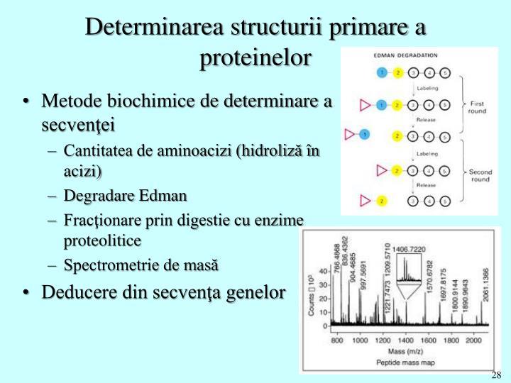 Determinarea structurii primare a proteinelor