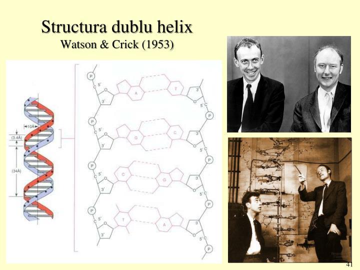 Structura dublu