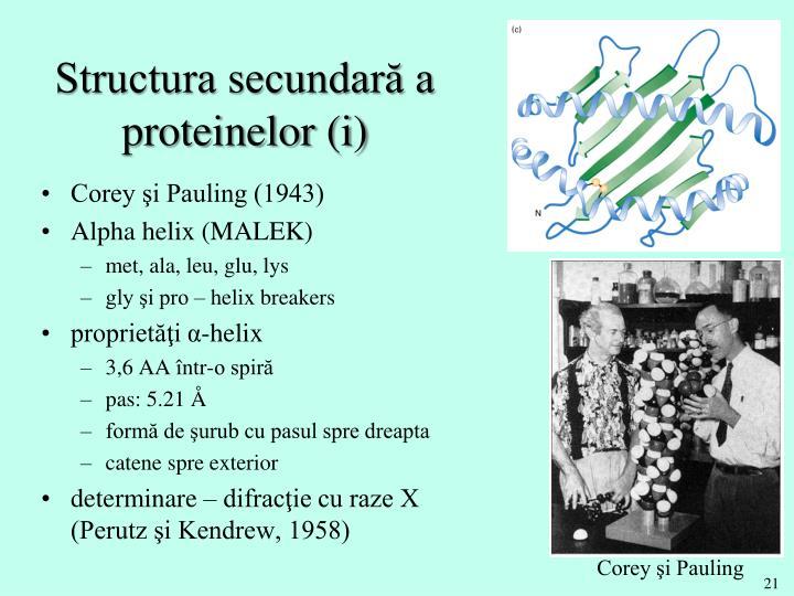 Structura secundară a proteinelor (i)