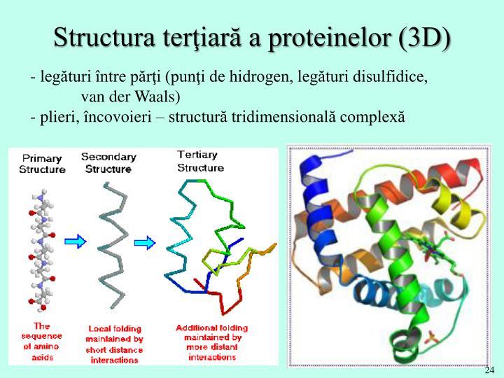 Structura terţiară a proteinelor (3D)