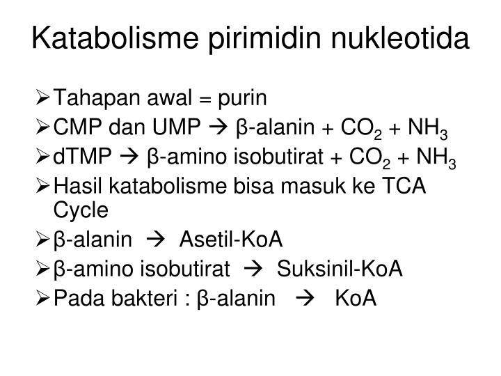 Katabolisme pirimidin nukleotida