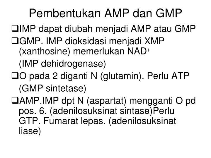 Pembentukan AMP dan GMP