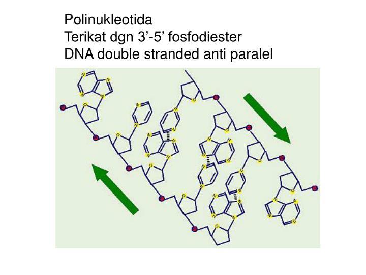 Polinukleotida