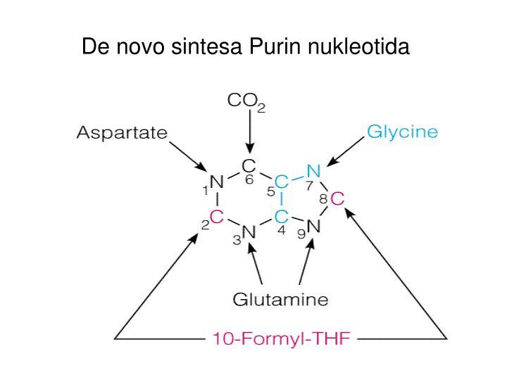 De novo sintesa Purin nukleotida